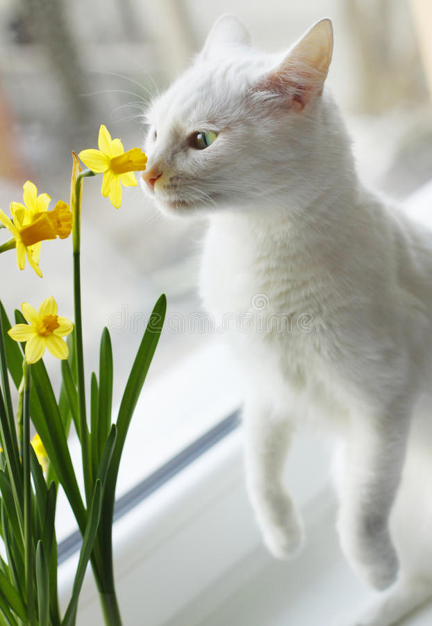 Free A White Cat Perspective Stock Image - 78038021