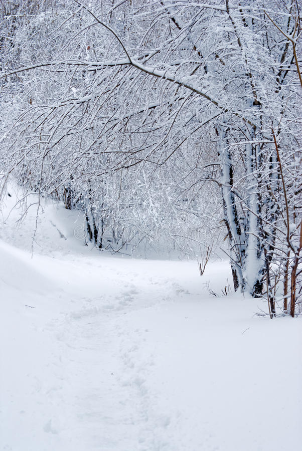 Free A Winter Tale Landscape Royalty Free Stock Photos - 13079908