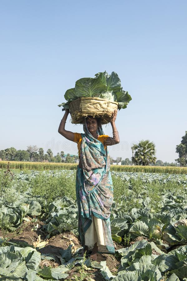 Free A Woman In Rural India Carrying A Basket On Her Head Royalty Free Stock Images - 145375859