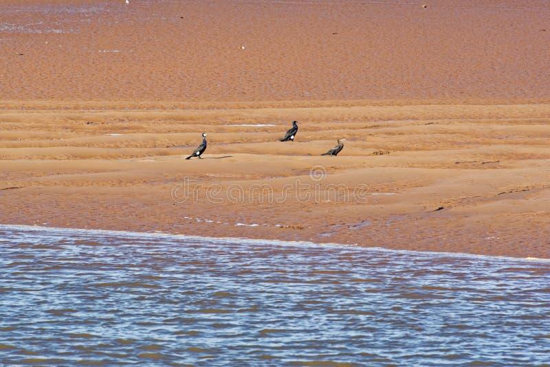 Download Aalscholvers Dichtbij Rivier Exe Stock Afbeelding - Afbeelding bestaande uit water, devonshire: 54079173