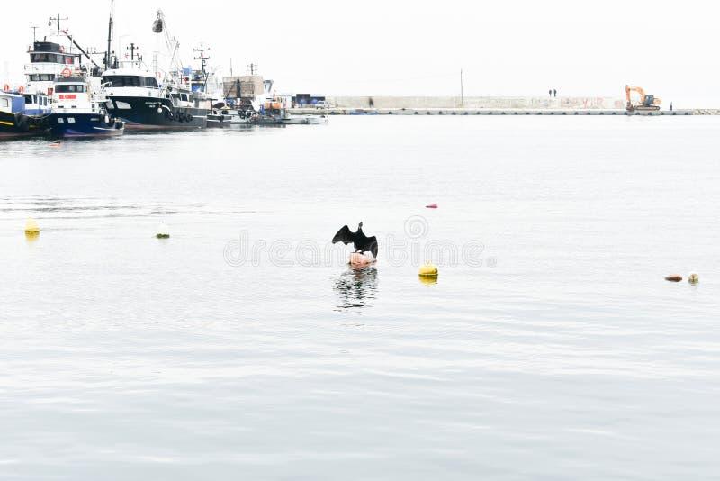 Aalscholvervleugels, vissersbootachtergrond stock afbeeldingen