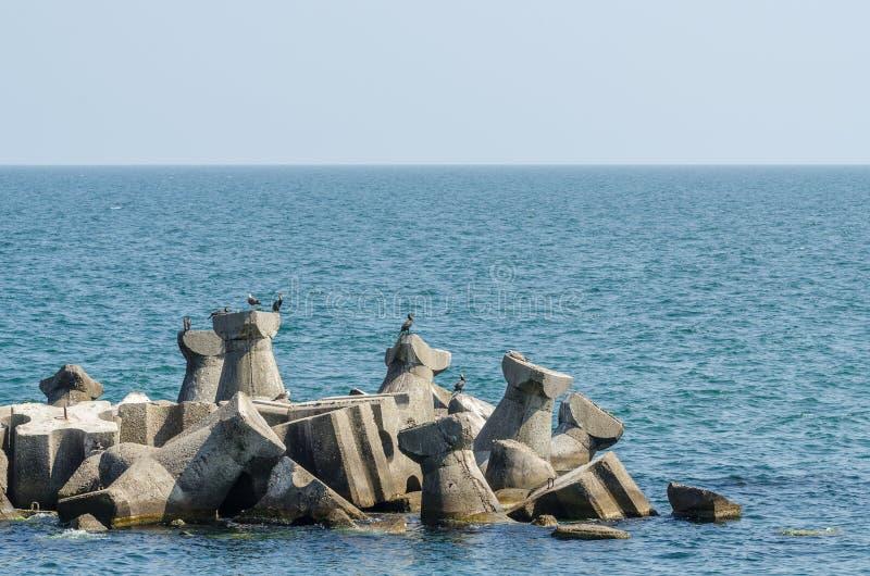 Aalscholvervogels in de Zwarte Zee royalty-vrije stock afbeeldingen