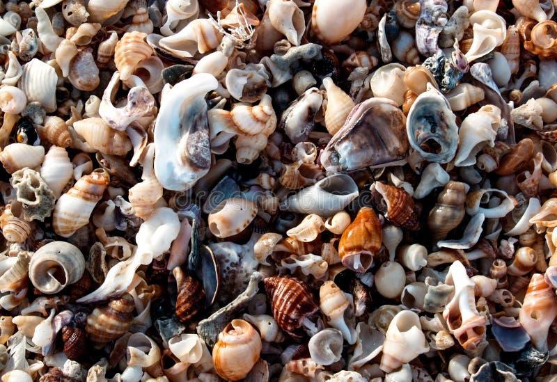 Aan wal omhoog gewassen zeeschelpen stock fotografie