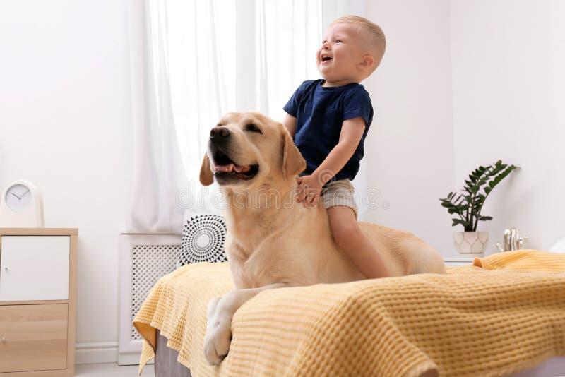 Aanbiddelijk geel labrador retriever en weinig jongen royalty-vrije stock afbeeldingen