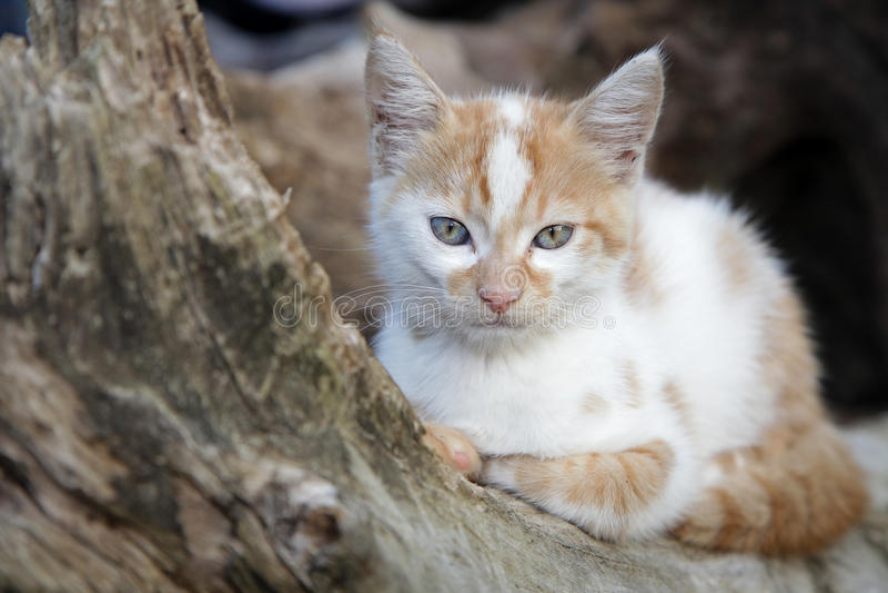 Aanbiddelijk katje royalty-vrije stock fotografie