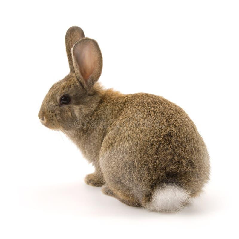 Aanbiddelijk konijn dat op wit wordt geïsoleerd¯ stock foto