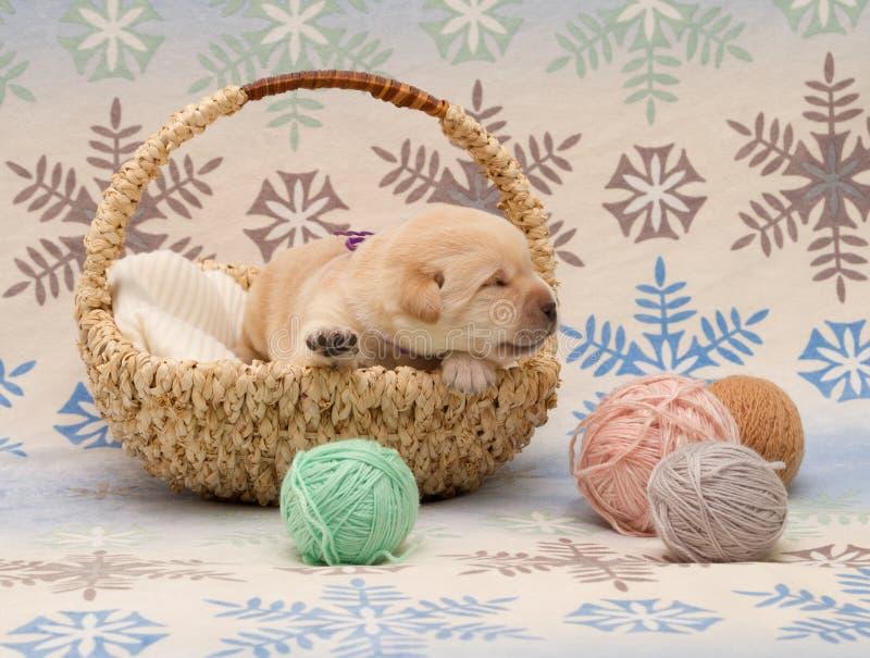 Aanbiddelijk labrador retriever-puppy royalty-vrije stock fotografie