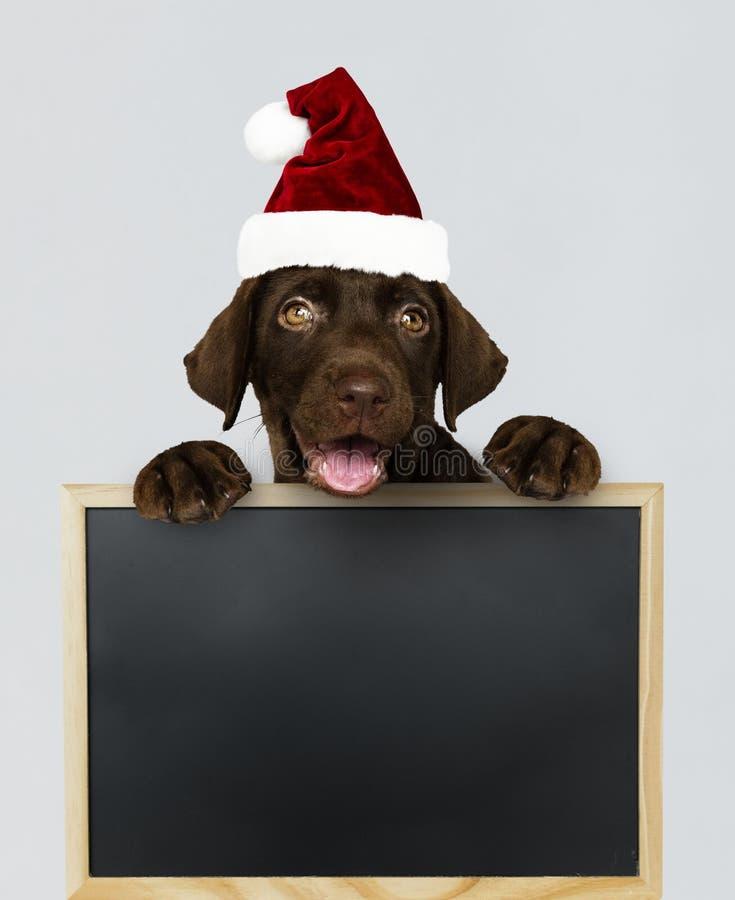 Aanbiddelijk Labradorpuppy die een Kerstmishoed dragen die een bordmodel houden stock foto
