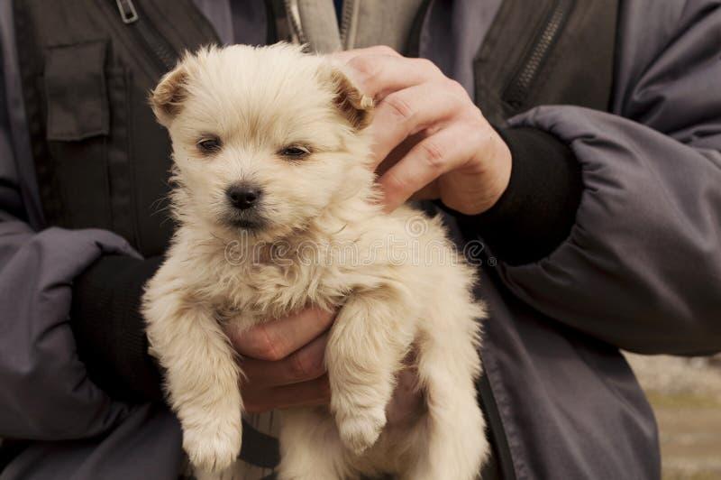 Aanbiddelijk puppy stock afbeelding