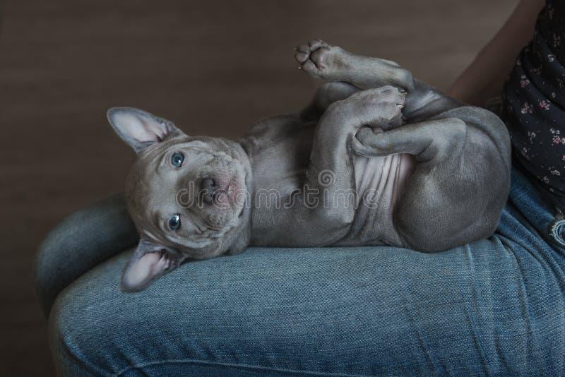 Aanbiddelijk puppy die op eigenaar` s overlapping liggen royalty-vrije stock foto