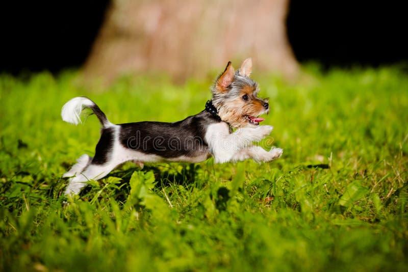 Aanbiddelijk puppy die in openlucht lopen stock fotografie