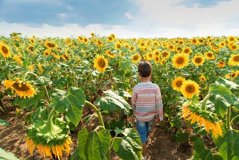 Aanbiddelijk weinig jong geitjejongen op het gebied van de de zomerzonnebloem openlucht Gelukkig kind die een zonnebloembloem op  stock foto