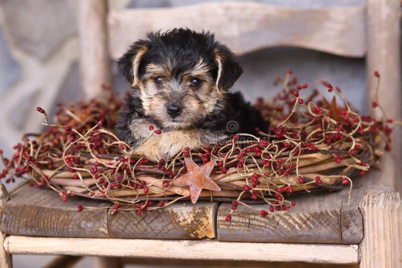 Aanbiddelijk Weinig Puppy met Rustieke Kroon royalty-vrije stock afbeeldingen
