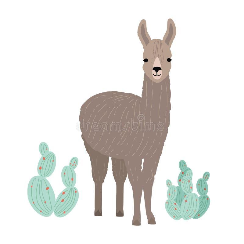 Aanbiddelijke die lama of cria op witte achtergrond wordt geïsoleerd Portret die van wild Zuidamerikaans dier zich naast cactusse stock illustratie