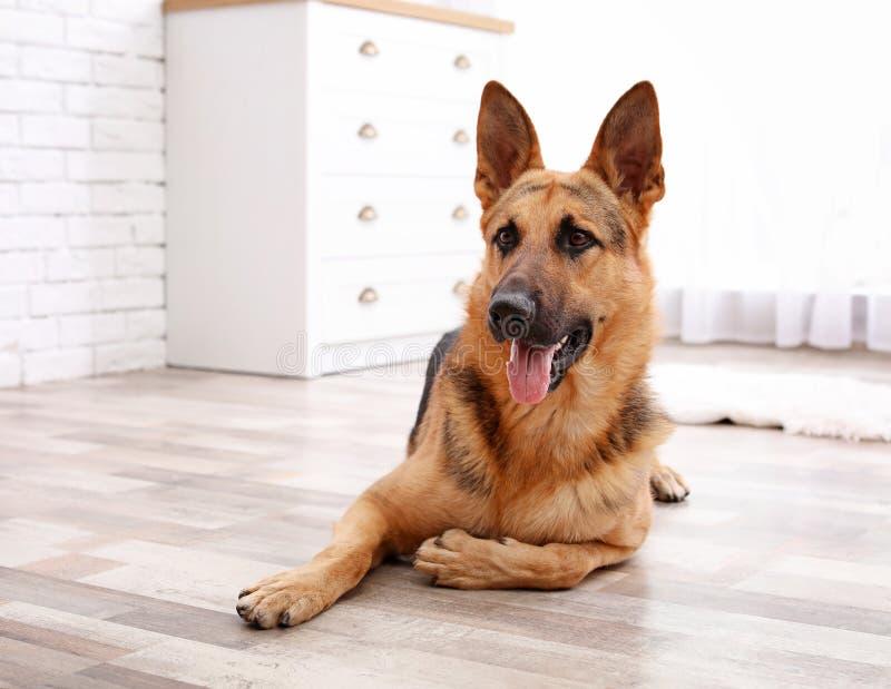 Aanbiddelijke Duitse herderhond die op vloer liggen stock afbeelding