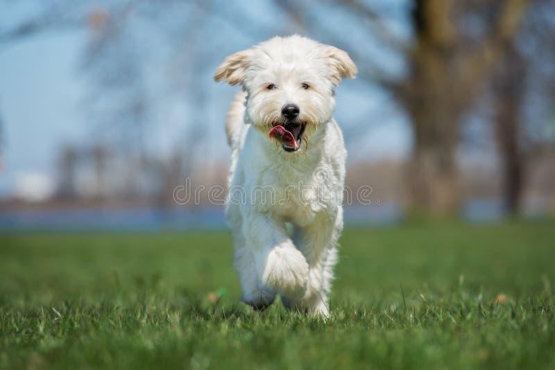 Aanbiddelijke gemengde rassenhond die in openlucht lopen royalty-vrije stock fotografie
