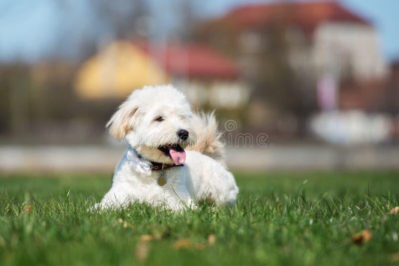 Aanbiddelijke gemengde rassenhond die in openlucht stellen royalty-vrije stock afbeelding