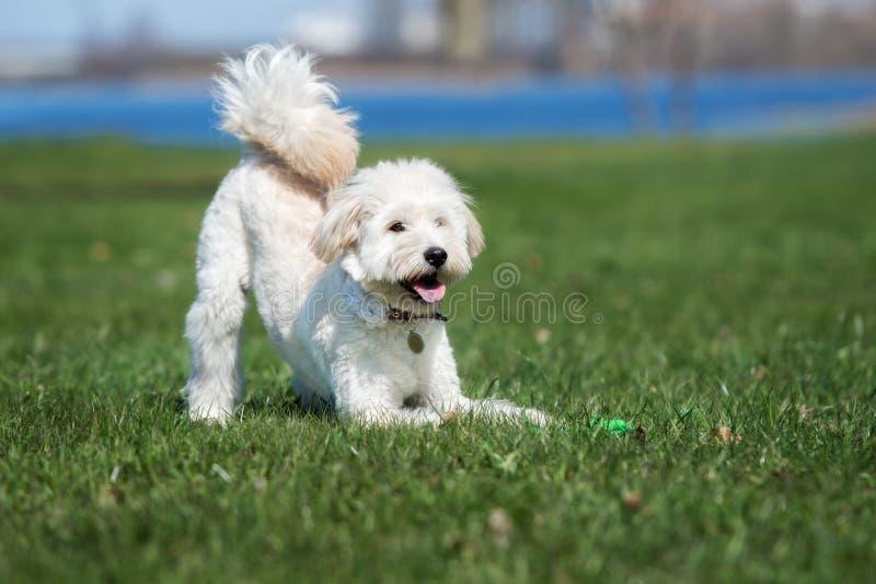 Aanbiddelijke gemengde rassenhond die in openlucht stellen royalty-vrije stock foto