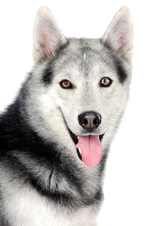 Aanbiddelijke hond stock afbeeldingen