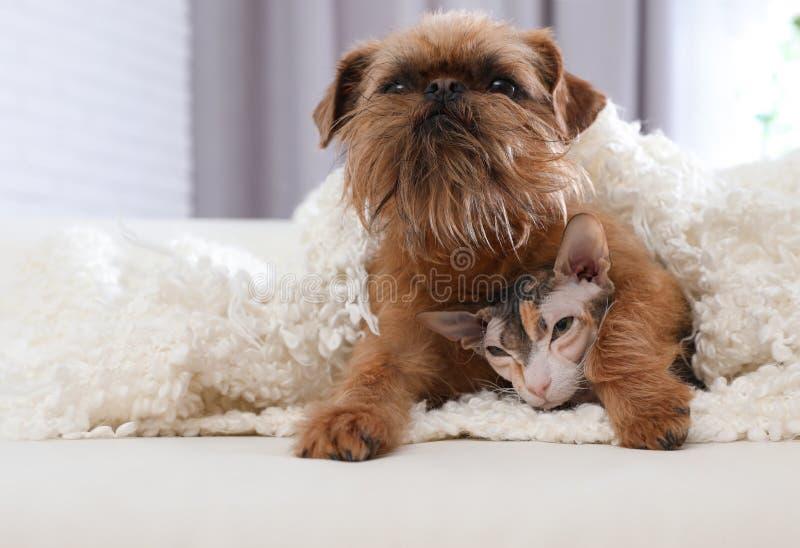 Aanbiddelijke hond camera onderzoeken en kat die onder deken samen op bank thuis stock afbeeldingen