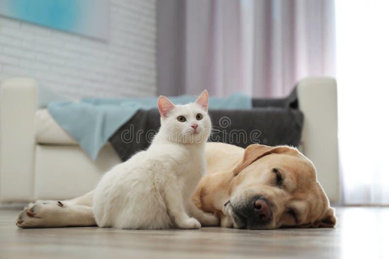 Aanbiddelijke hond en kat samen op vloer binnen royalty-vrije stock fotografie
