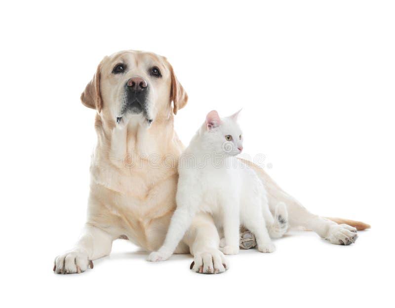 Aanbiddelijke hond en kat samen op witte achtergrond stock afbeeldingen