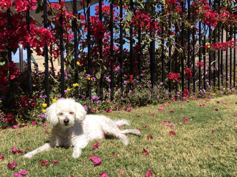 Aanbiddelijke Hond op Gras stock afbeeldingen