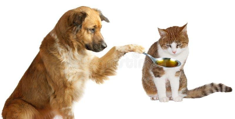 Aanbiddelijke honddierenarts stock afbeeldingen