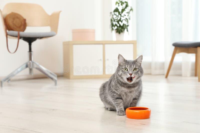 Aanbiddelijke kat dichtbij kom voedsel binnen stock foto