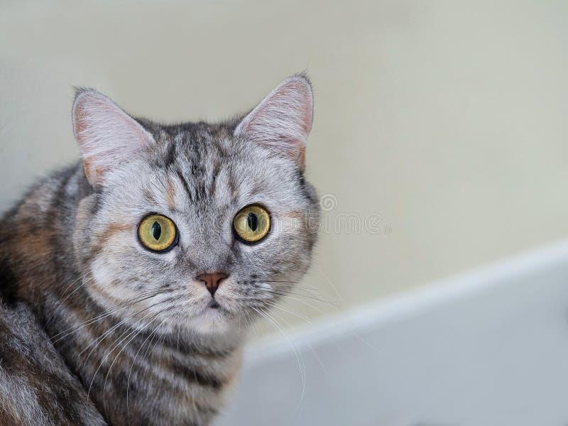 Aanbiddelijke kat die vooruit eruit zien stock foto's