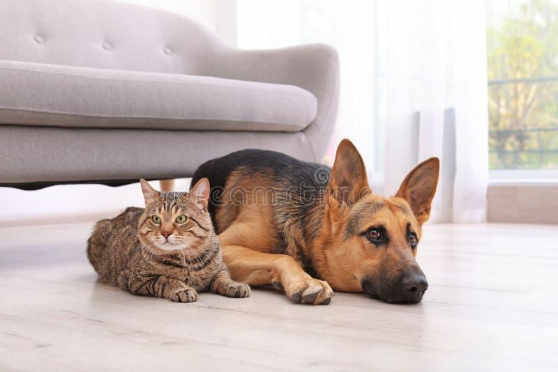 Aanbiddelijke kat en hond die samen dichtbij bank rusten binnen stock foto