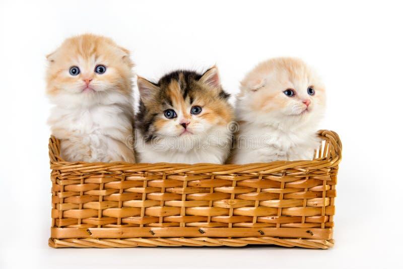 Aanbiddelijke katjes in de mand royalty-vrije stock afbeeldingen
