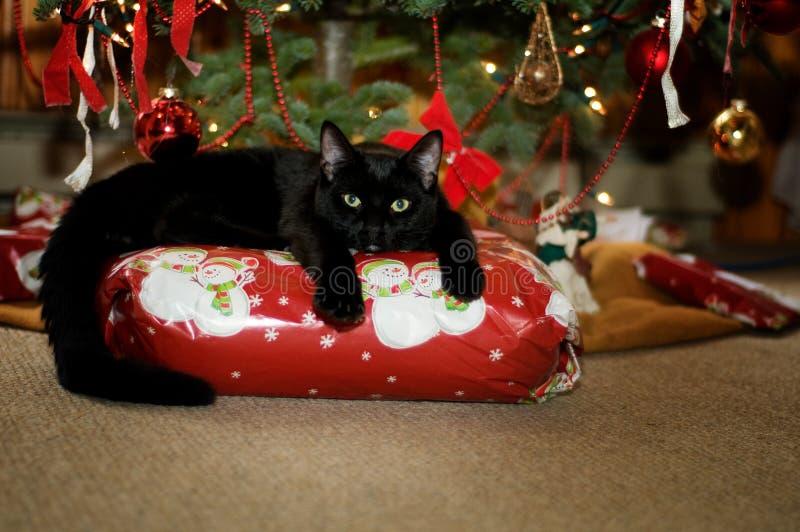 Aanbiddelijke Kerstmiskat royalty-vrije stock afbeelding