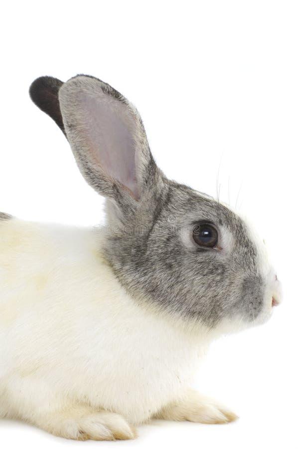 Aanbiddelijke konijnen stock afbeeldingen