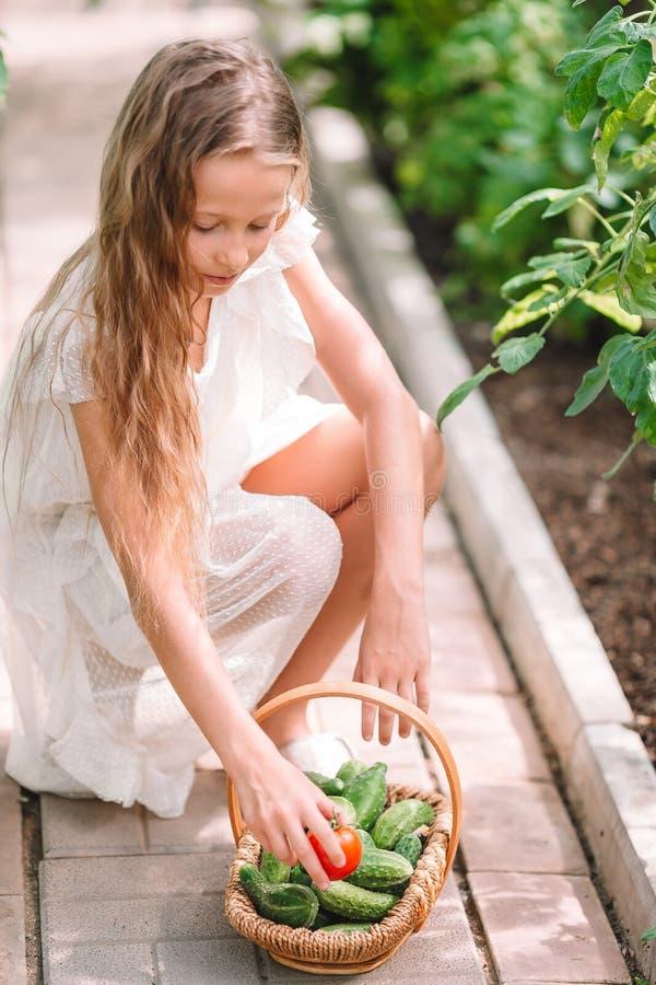 Aanbiddelijke meisje het oogsten komkommers en tomaten in serre stock foto's
