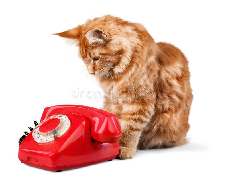Aanbiddelijke rode die kat en retro telefoon op wit wordt geïsoleerd stock afbeelding