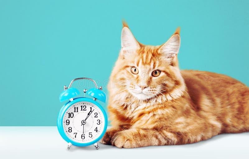 Aanbiddelijke rode kat met klok op lijst stock fotografie