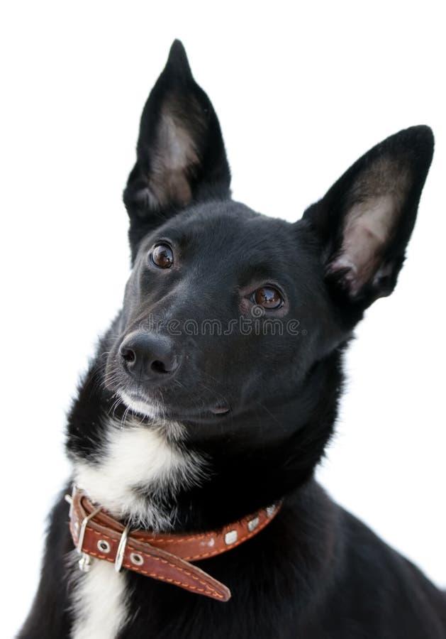Aandachtige hond stock foto