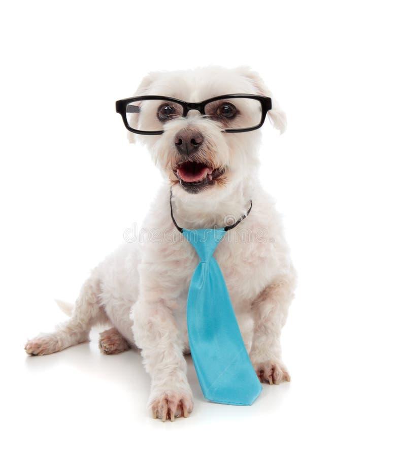 Aandachtige Hond Die Omhoog Eruit Ziet Royalty-vrije Stock Afbeelding