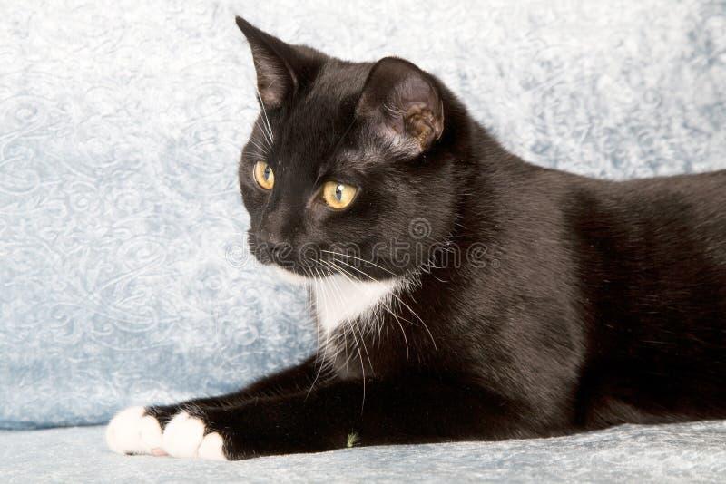 Aandachtige kat royalty-vrije stock afbeeldingen