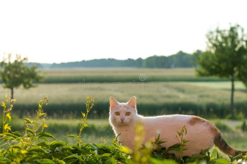 Aandachtige Kat in de Ochtendzon royalty-vrije stock afbeelding