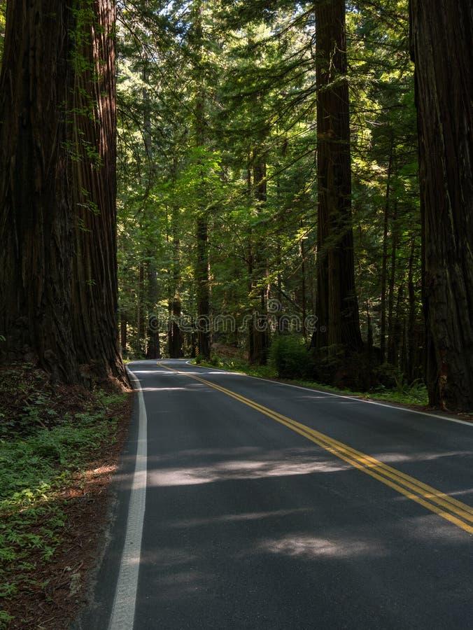 Aandrijving door de Californische sequoia's van Californië stock fotografie