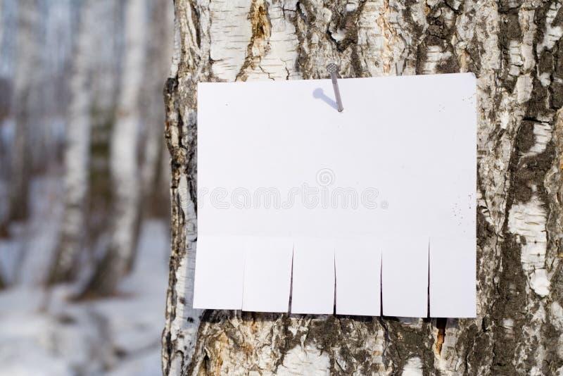 Aankondiging op boom stock fotografie