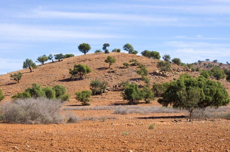 Aanplanting van argan bomen, Marokko stock foto