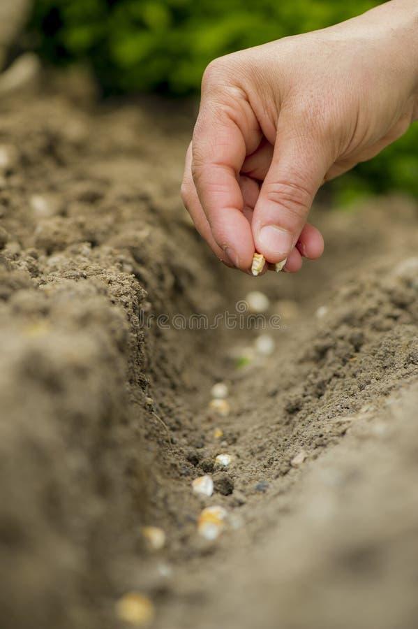 Aanplantings tuin-Hulpmiddelen stock foto