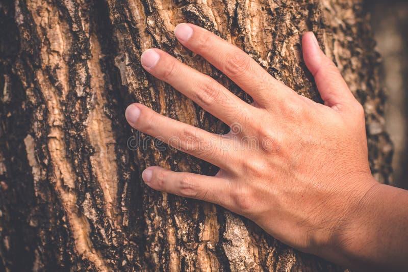 Aanraking van de de greep viel de oude boom van de mensenhand aan textuur van mooie de oppervlakteachtergrond van de aardterugtre royalty-vrije stock foto's