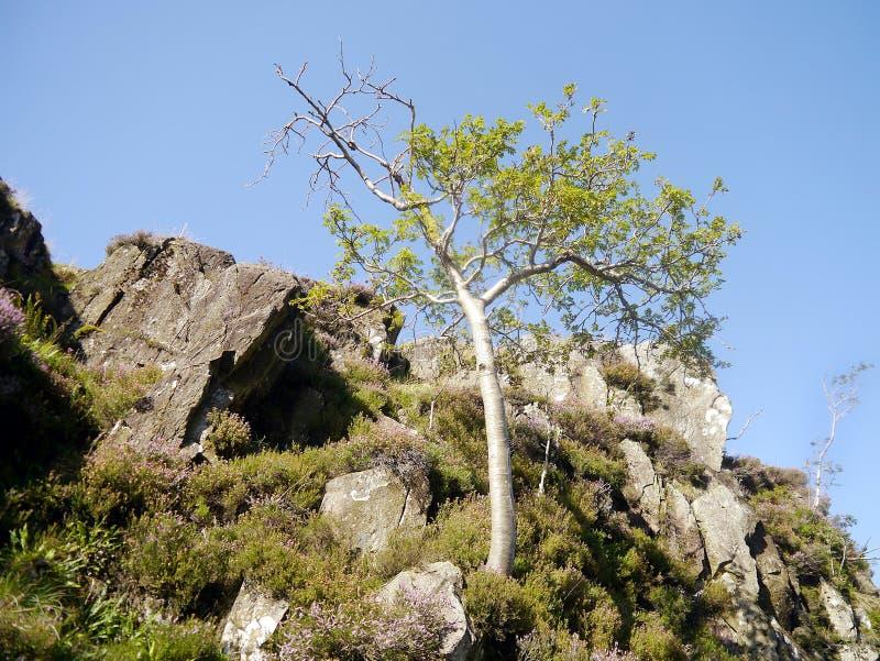 Aantrekkelijke boom onder rotsen op kleine heuvel royalty-vrije stock afbeelding