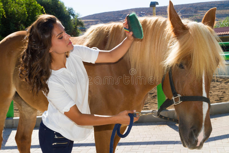 Aantrekkelijke jonge vrouw die een paard verzorgen bij royalty-vrije stock afbeelding