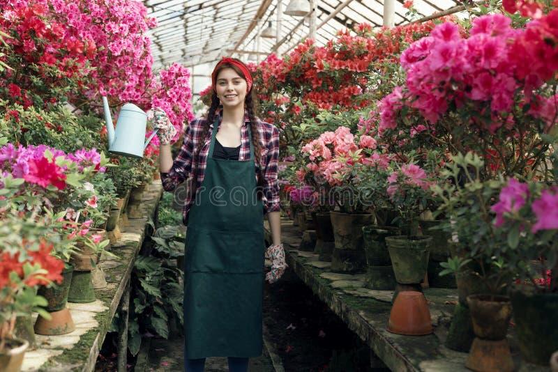 Aantrekkelijke jonge vrouwentuinman die in het werkkleren met rode hoofdband kleurrijke bloemen in serre water geven royalty-vrije stock afbeeldingen