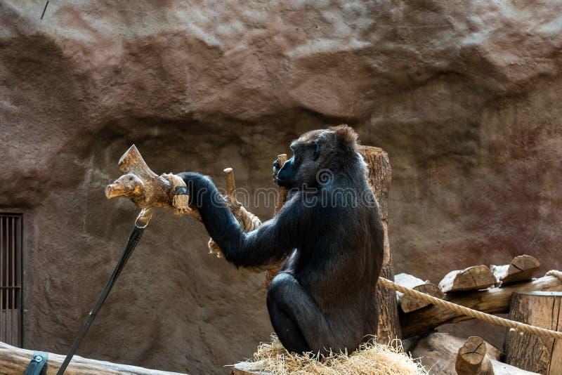 Aap bij de dierentuin stock foto's